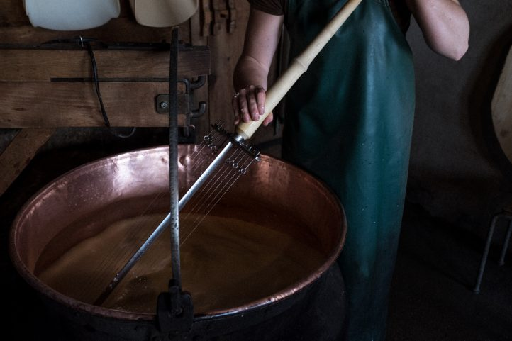 Once the culture and the rennet have been added, the mass is then cut with a cheese harp. This process is known as 'pre-curdling'. The culture is made up of the lactic acid bacteria, which are needed to break down the lactose and to ripen the cheese. Rennet is an enzyme found in the stomach of calves; it causes the milk to curdle.