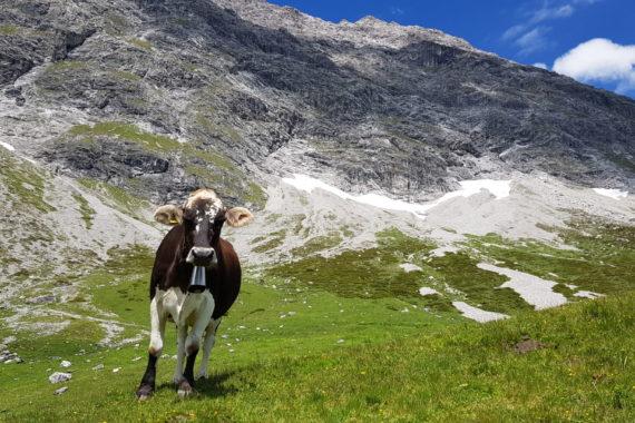 ** Wem gehören die Tiere auf der Alp?
