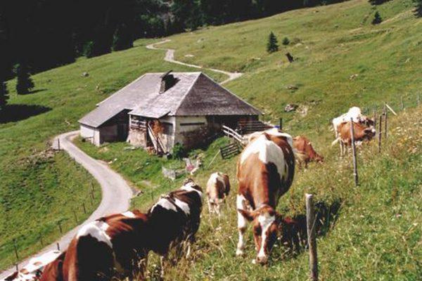 Alpage Les Groins (FR)