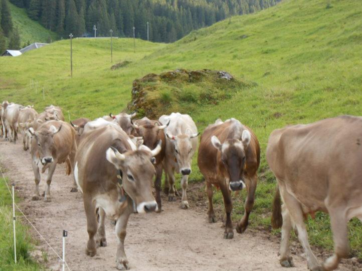 18. OLMA Alpkäse-Prämierung – Einladung zur Teilnahme